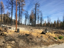 Signs of the fire in Alta Lake State Park